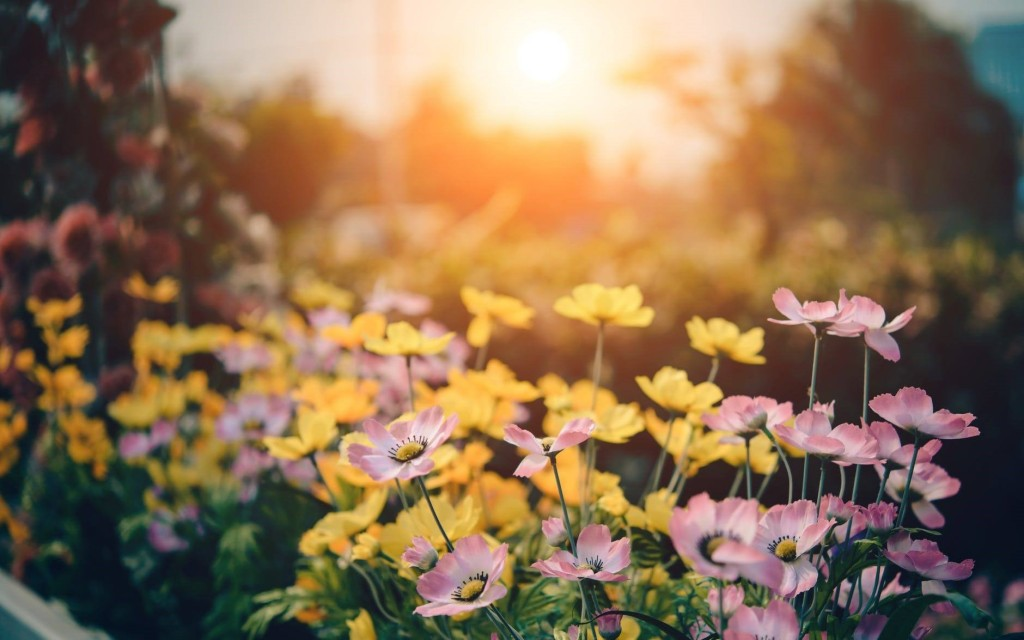 https://catskidschaos.com/wp-content/uploads/2018/02/Flowers-kids-garden.jpeg
